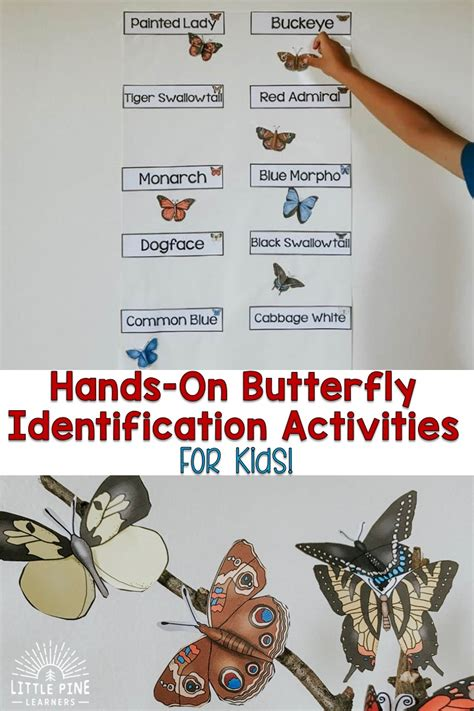 Hands-On Butterfly Identification Activities for Kids