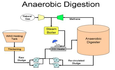 What exactly is anaerobic digestion? | TechZPlus