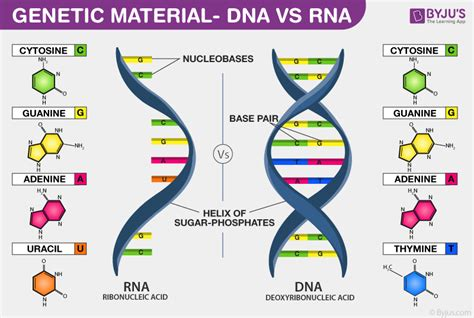 Genetic Material - Properties and Differences between DNA