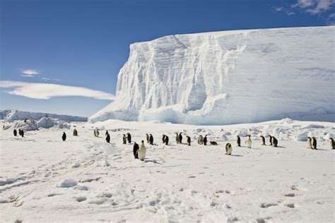 Antarctica Facts for Kids   Geography   Continents   Facts