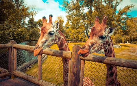 Chester Zoo is on the lookout for new recruits | Recruiter