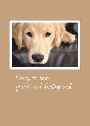 Send Get Well Cheer With This Retriever