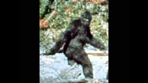 BIGFOOT CAUGHT ON CAMERA REAL LIVE FOOTAGE - YouTube