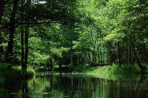 Spreewald – Travel guide at Wikivoyage